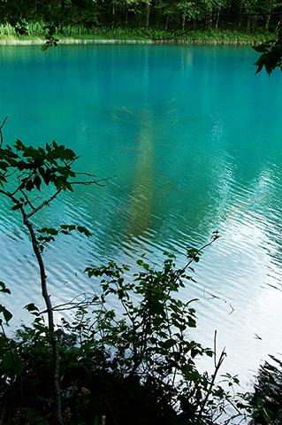 湖底木が話すオンネトーの神秘