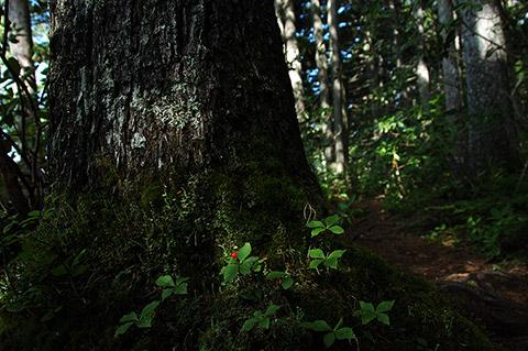 森といきものの関係