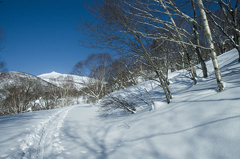 トレースの先に目国内岳が真っ白