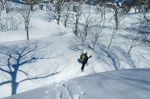まだ誰も歩いていないぴかぴかの雪面に、刻む二本のスキーの跡。