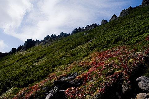 鋸岳のウラシマツツジは紅葉が始まっていました。