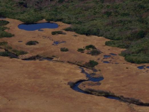湿原を見おろす