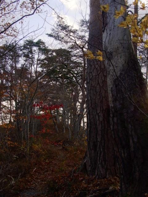 秋の日は短し