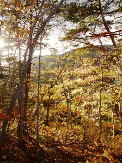 紅葉の翁倉山